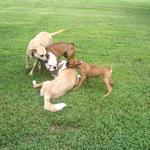 Dogs Playing at Exercise Time